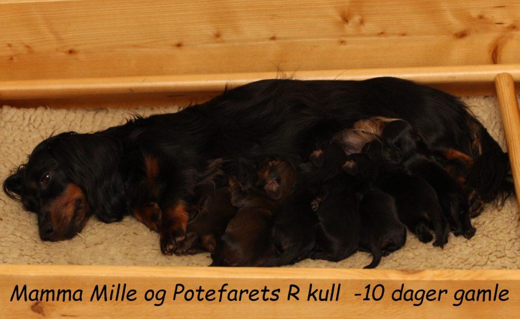 Mamma Mille og Potefaret T